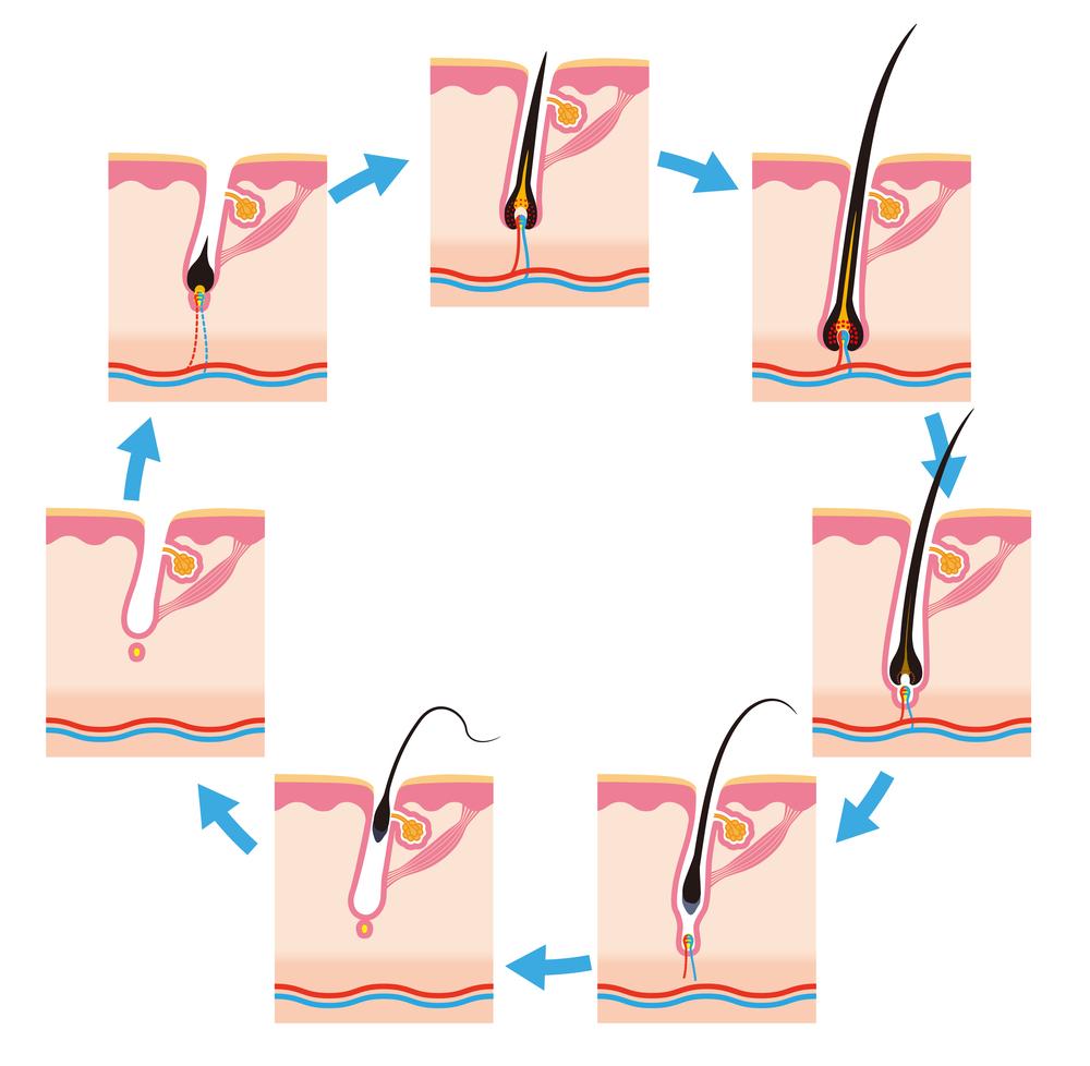 キレイモの脱毛効果が高くなる通い方とメリットデメリットをご紹介