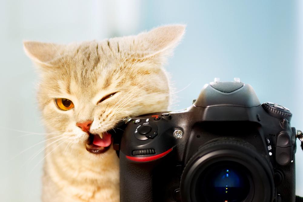 パパ活サイトのプロフィール写真でパパ活を成功させる方法!